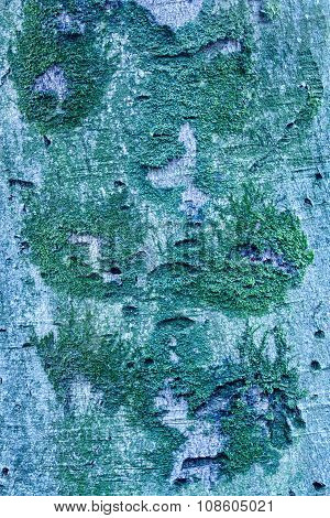 Face Shaped Moss On Tree Trunk