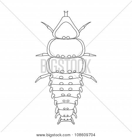 Trilobite beetle Duliticola Platerodrilus. Sketch of  Trilobite beetle.  Trilobite beetle isolated o
