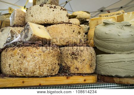 Italian cheeses. Color image