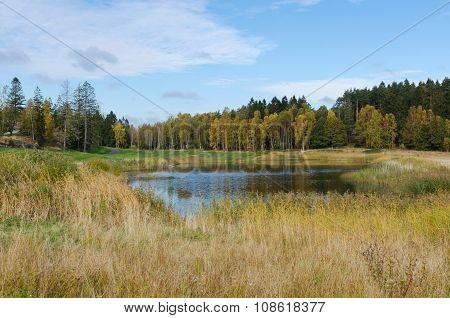 Autumn At Golf Cource