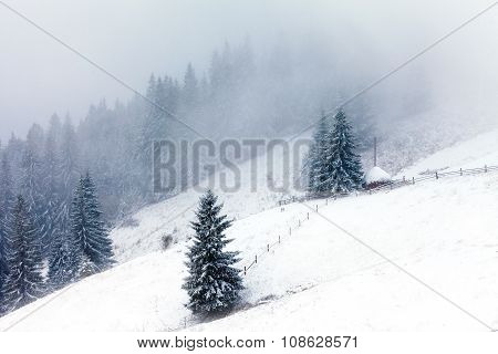 Foggy Forest In Winter