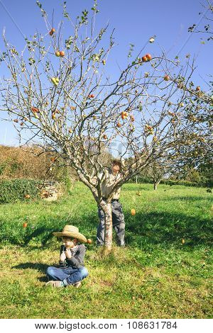Senior man moving tree and apples falling over kid sitting