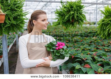 Positive florist working in the greenhouse