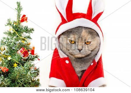 Sad Christmas Cat