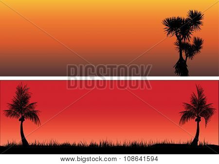 Coconut Trees And Pandanas In The Sunset