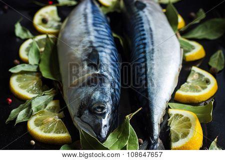 Fresh Raw Mackerel Fish  With Lemon And Bay Leaves