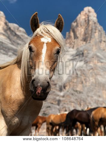 Horses Under Monte Pelmo In Italian Dolomities