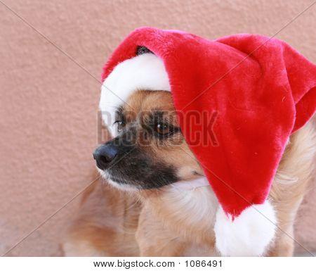 Santa Dog 2