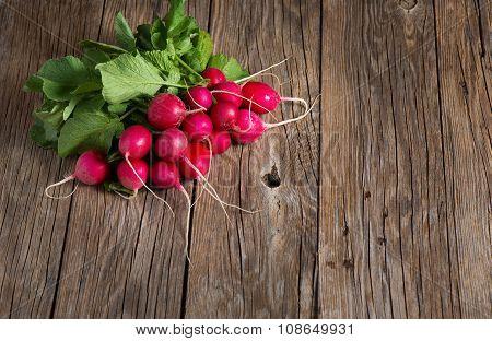 Red Garden Radish