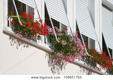 Windows With The Sun Tents And Geranium.