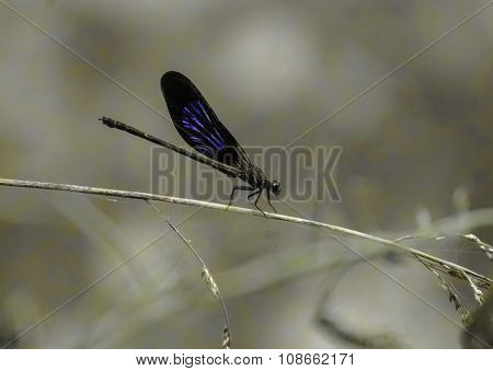 resting dragon fly on grass