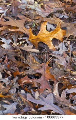 Mix Of Colorful Dry Autumn Leaves
