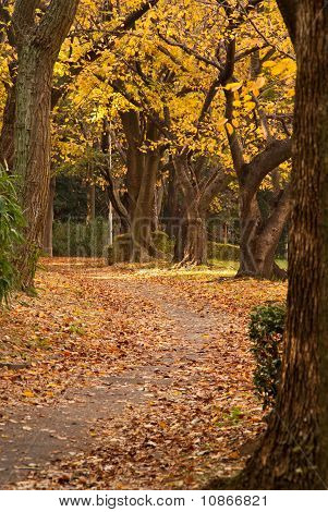 A Treed Pathway Runs Through A Colorful Autumnal Scene