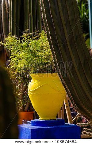 Jardin Majorelle In Marrakesh