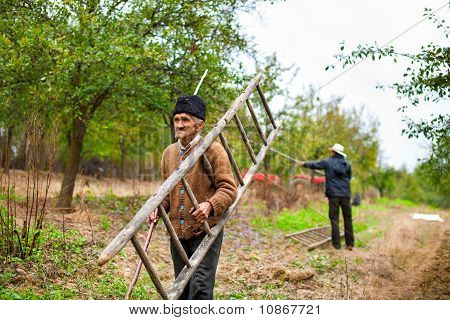 Old Farmer With A Wooden Ladder