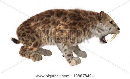Big Cat Sabertooth Roaring