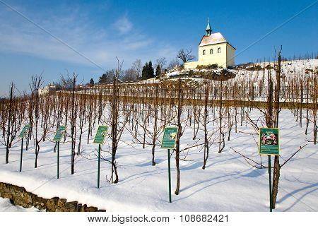 St. Clara Vineyards, Troja, Prague, Czech Republic