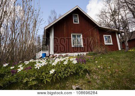 old cottage in spring garden