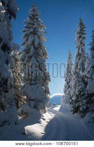 Road In Snow Covered Forest
