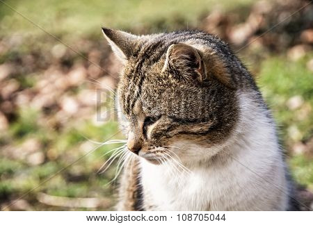 Domestic Cat Pursues Prey
