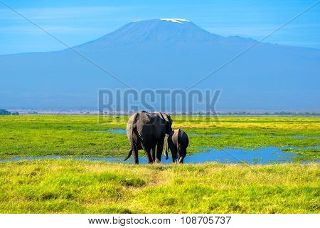 Beautiful Kilimanjaro mountain and elephants, Kenya, Amboseli national park, Africa