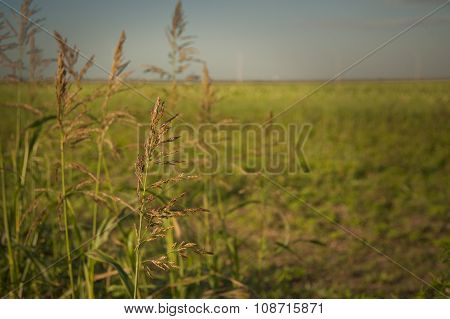 Fields In Waiting
