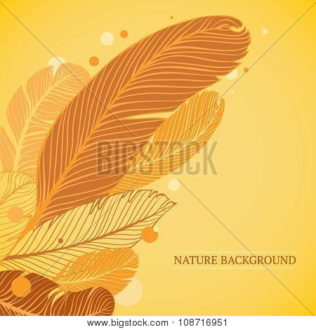 Nature background with feathers elements
