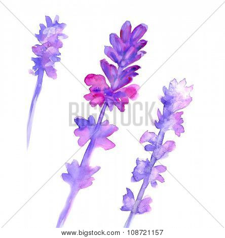 Watercolor lavender set. Lavender flowers isolated on white background.