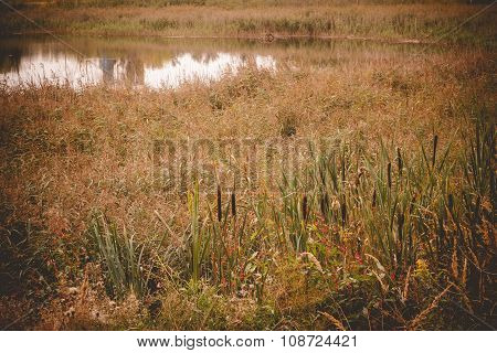 Reeds Near A Pond