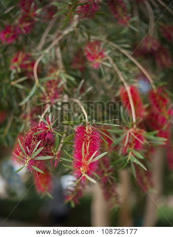 exotic red flowers on tree in summer park