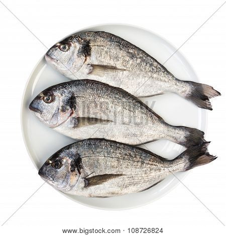 Fresh Dorada Fish On White Plate Isolated Over White. Top View