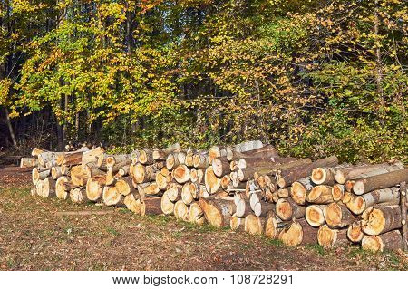 A pile of cut tree trunks in a forest