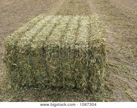 Single Large Bale Of Peavine Hay