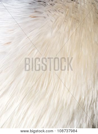 White Bird Feathers