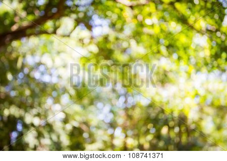 Blur Bokeh Nature Background. Green Bokeh Background. Nature Bokeh.