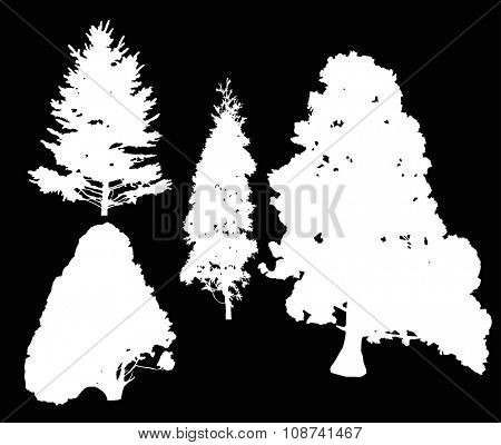 illustration with pine and fir tree silhouettes isolated on black background