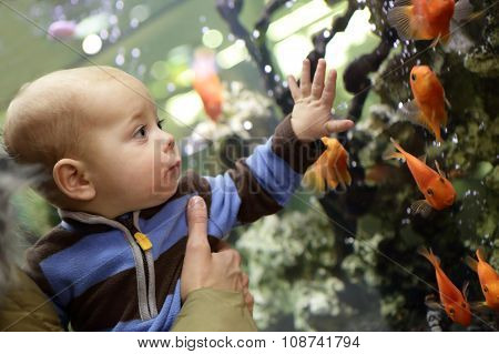 Baby Boy Watching The Gold Fishes