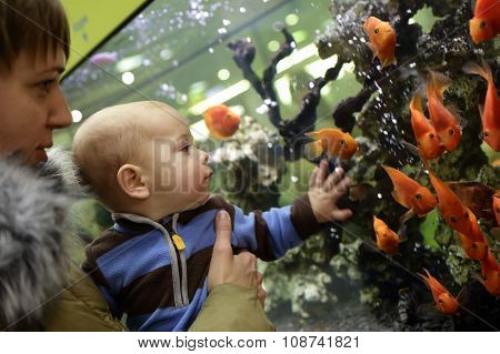 Mother And Her Son Watching The Gold Fishes