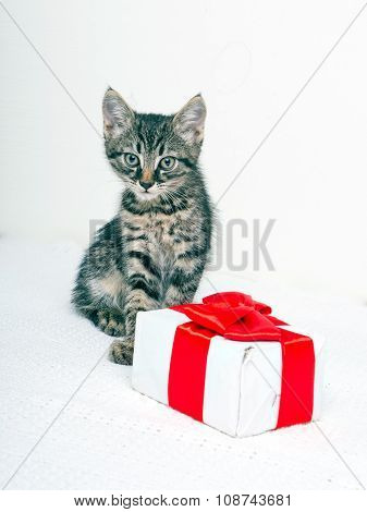 Cute kitten with present box