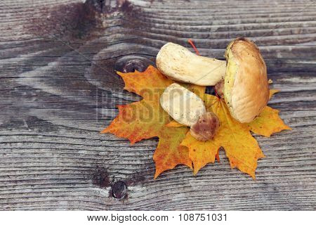 Basket of mushrooms on wooden background