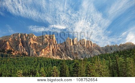 fir forest in the dolomites