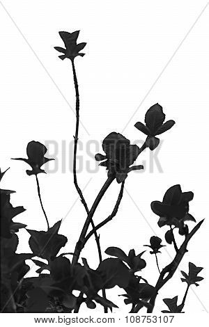 Black Plants Nature Background