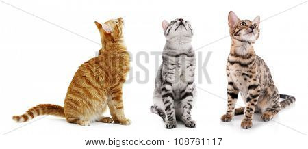Cute cats isolated on white