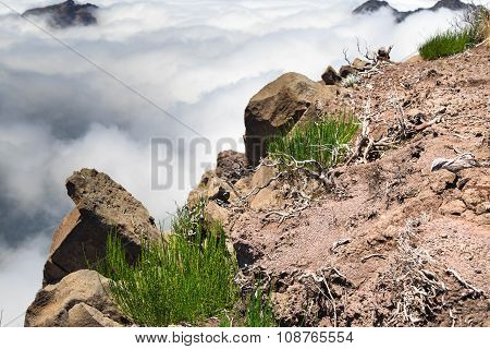 Dry Branches Of Undersized Trees And Green Grass Among Stones On The Edge Of An Abyss, Above Clouds.
