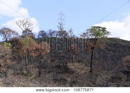 Burned Land