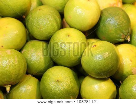 Bergamia Citrus Or Green  Bergamot  For Sale To The Greengrocery