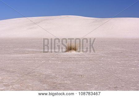 Isolated Grasses In A Desert
