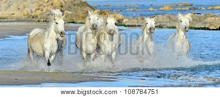 Running White Horses Through Water