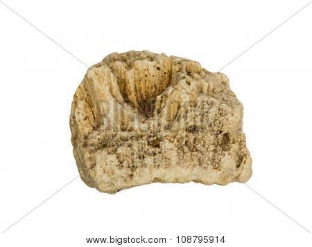 A small fragment of fossilized sea sponge