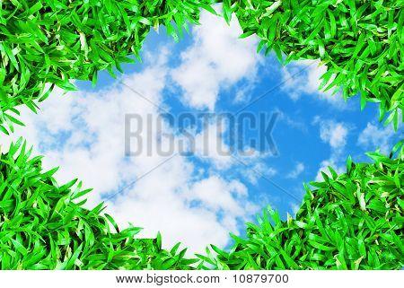 Quadro de grama verde sobre fundo de céu bonito